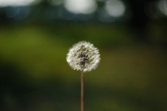 Zarodniki grzybów i pyłki roślin przyczyną alergii